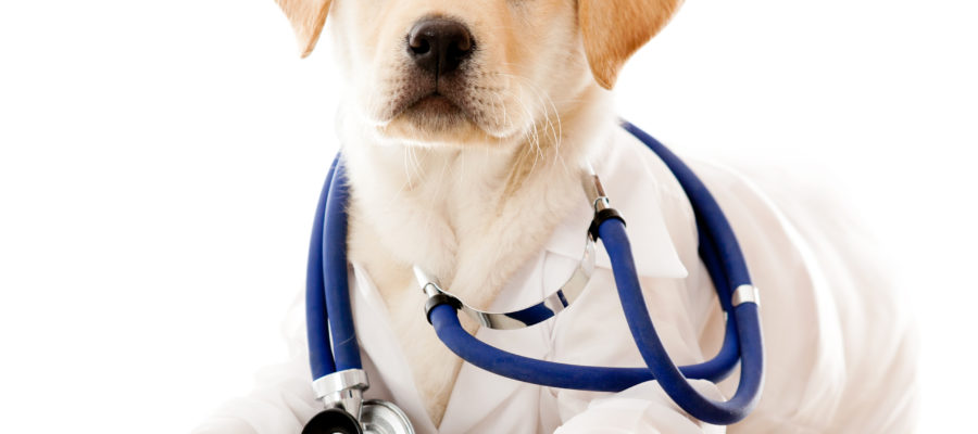 pets-and-health